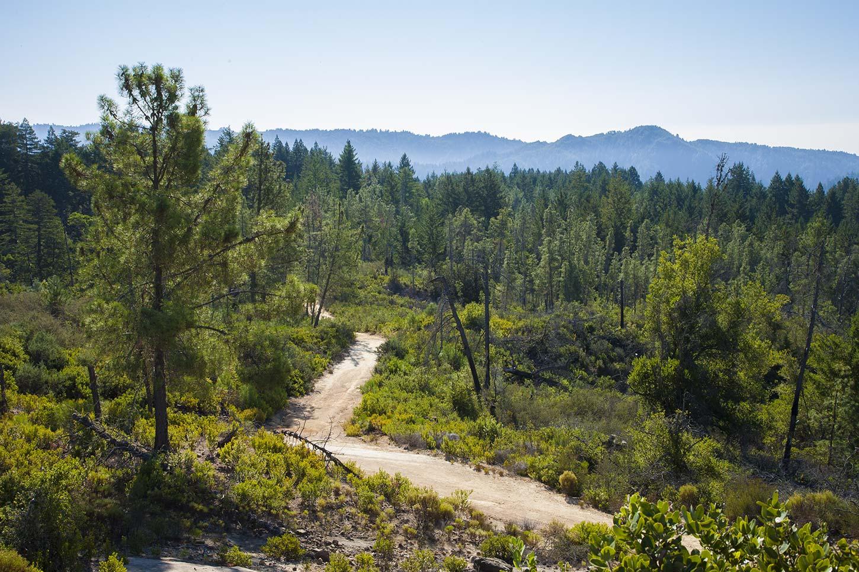 The Basin Trail