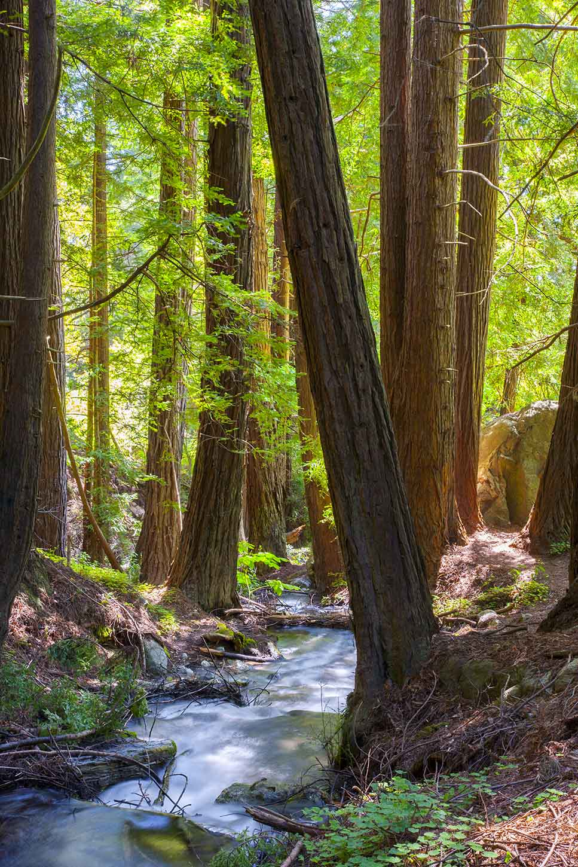 the ewoldsen trail