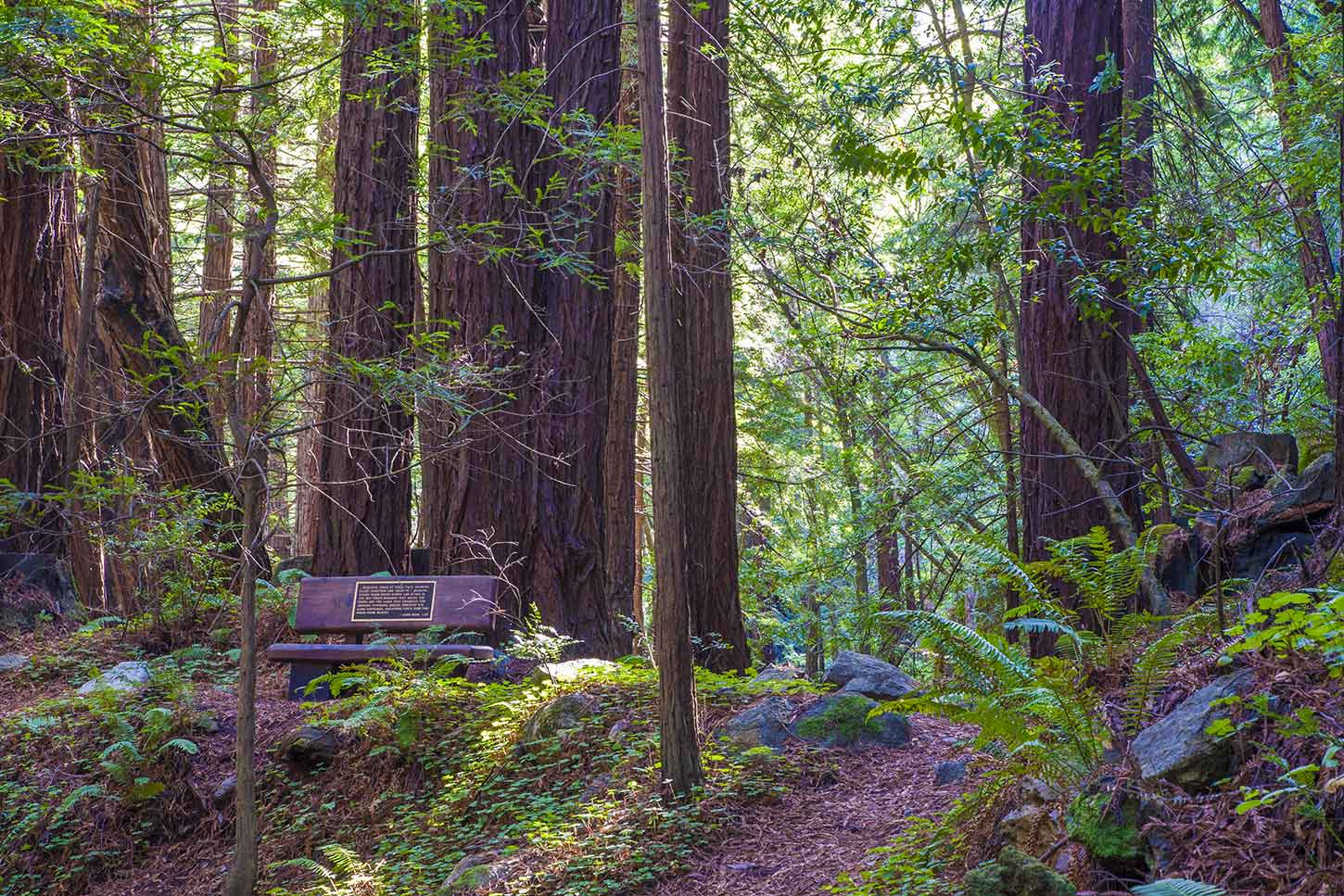 limekiln big and beautiful singles 12 reviews of lime kiln trail i've done this hike parts of it are as beautiful as anywhere else the lime kiln is we did not see big foot but i had a.