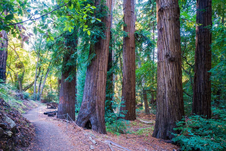 The Pfeiffer Falls Trail