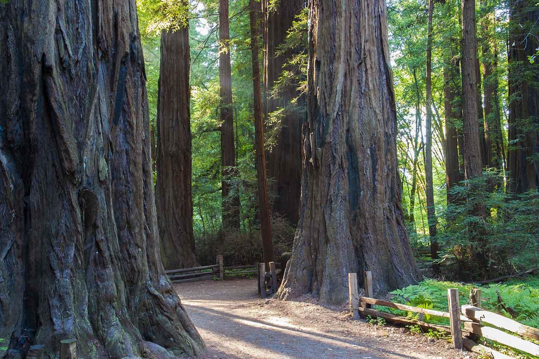 The Redwood Grove Loop Trail on shady state park, rv park, calaveras big trees state park, wilder ranch state park, morro bay state park, butano state park, castle rock state park, kodachrome basin state park, samuel p. taylor state park, portola redwoods state park,