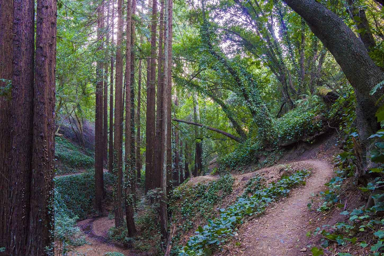 JoaQuin Miller trail oakland