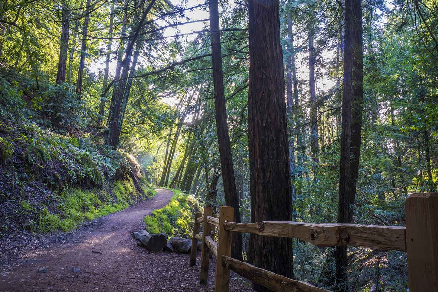 This Wide Level Trail Is The Most Por In Park There Are Patches Of Redwoods Canyons But Mostly Non Redwood Forest
