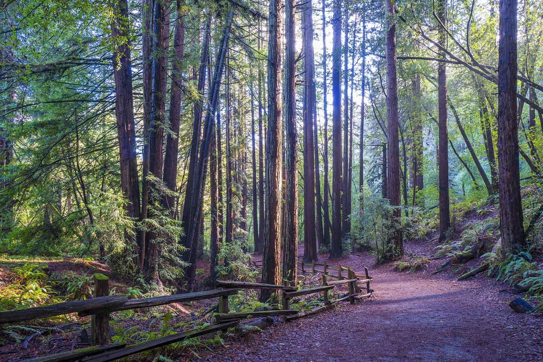 Image result for redwood regional park