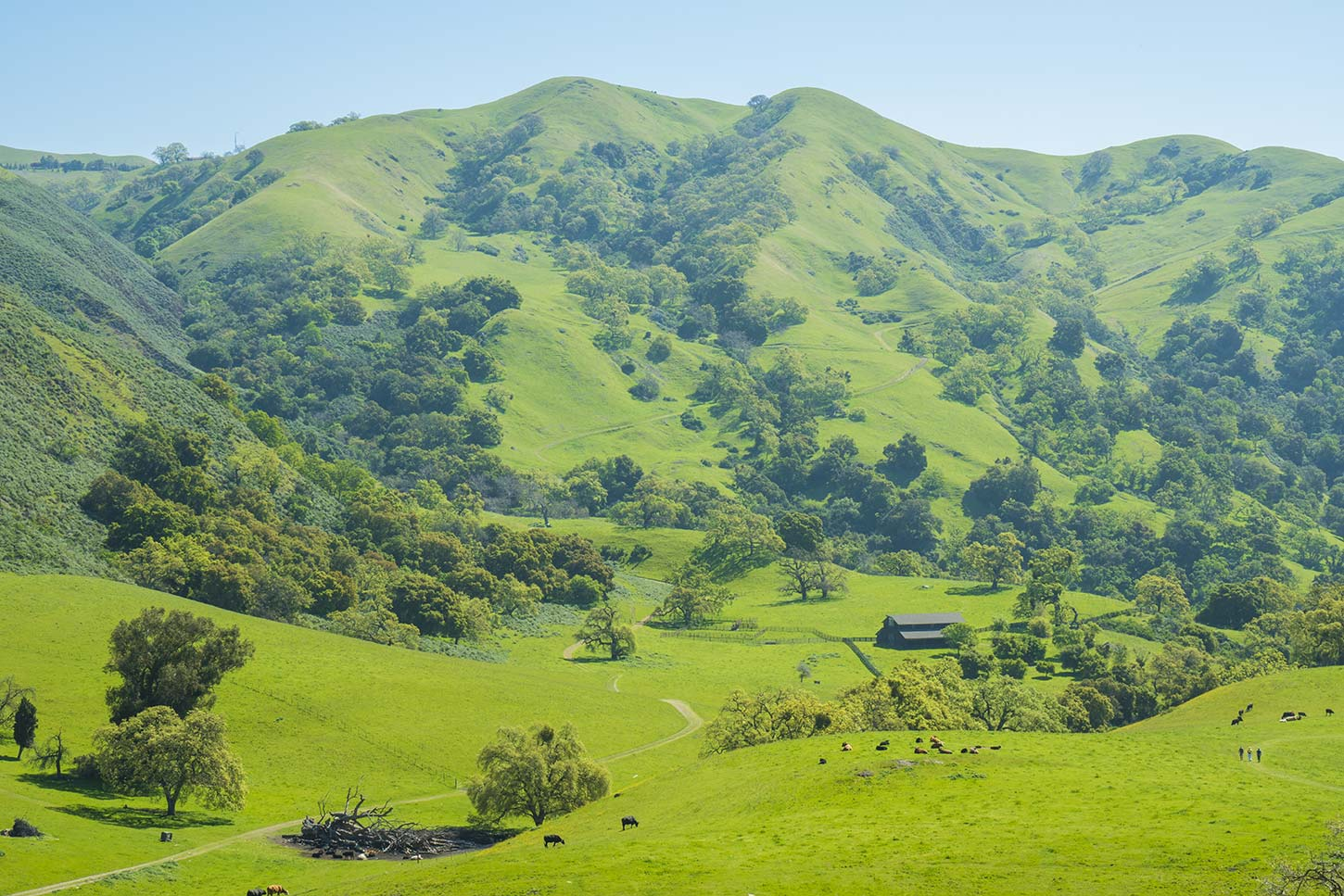 Flag Hill Trail, Sunol Regional Wilderness