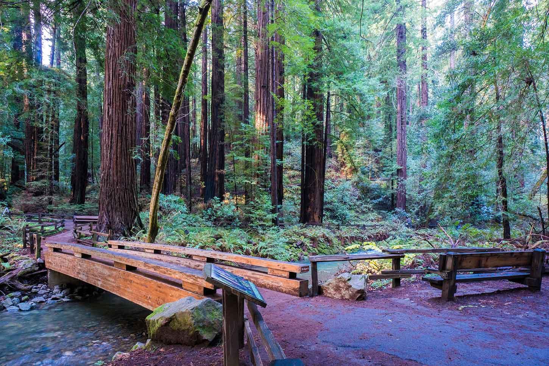 The Bohemian Grove Trail