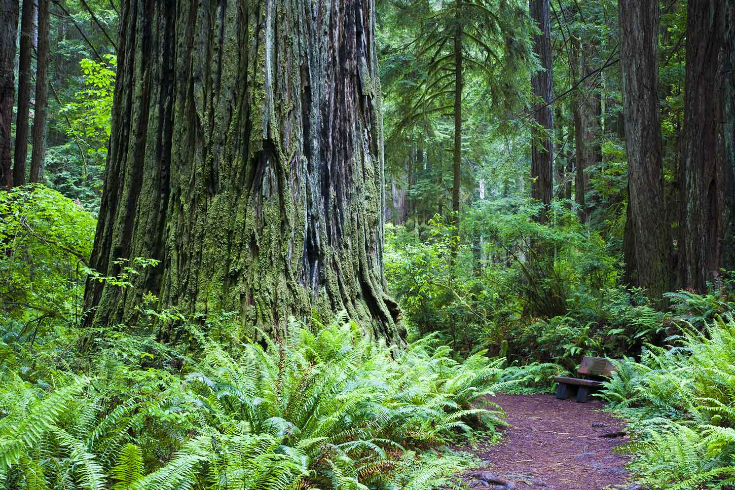 best hikes in redwood national park