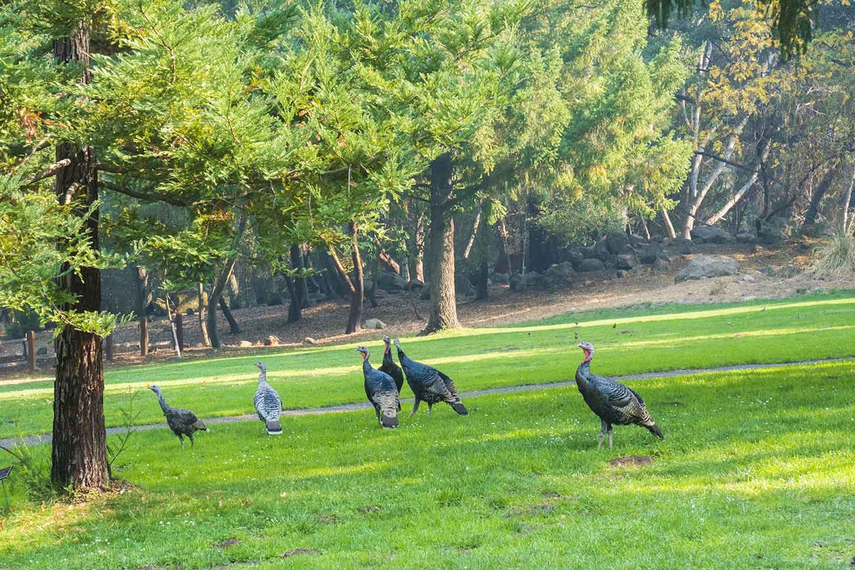 Sanborn Park Saratoga
