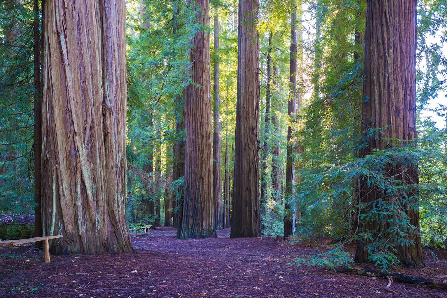 No Easy Off Ramps >> Smithe Redwoods State Natural Reserve