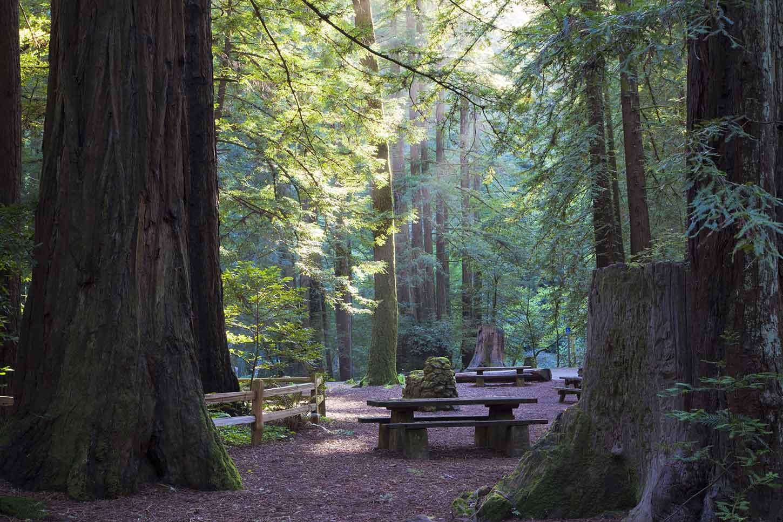 Image result for Samuel P. Taylor State Park