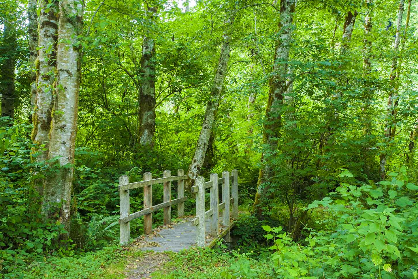 Old redwoods of the trail pass through forest | Amazing Hiking Trails You Have To See To Believe